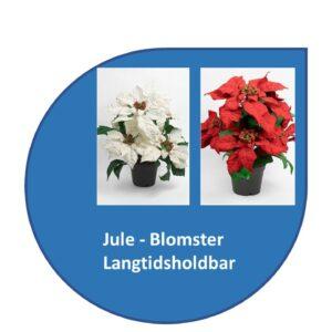 Blomster - Juleblomster
